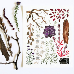 February Nature Collection