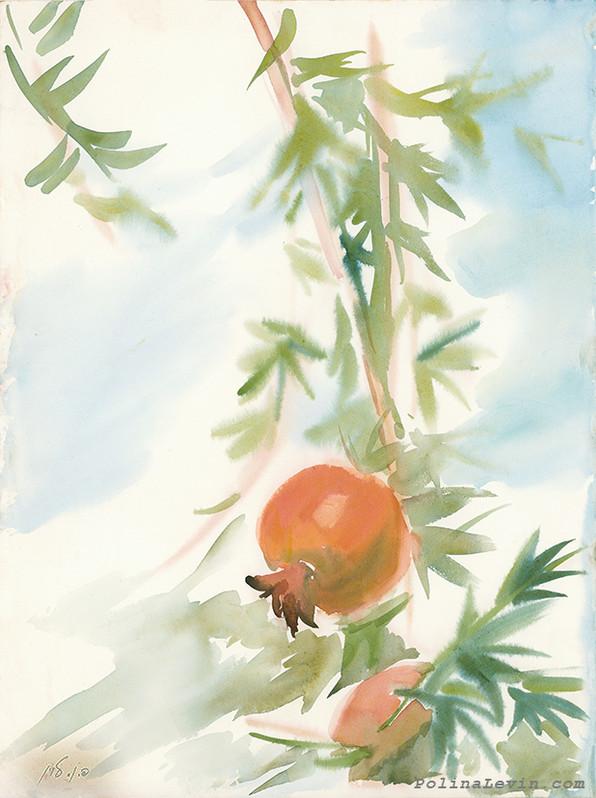 Pomegrante