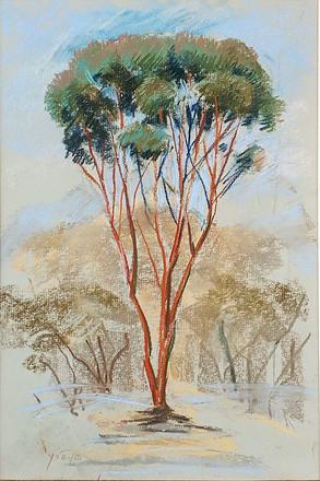 עץ במתבר