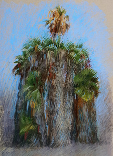 Palms and Nature