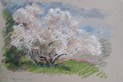 миндалевое дерево