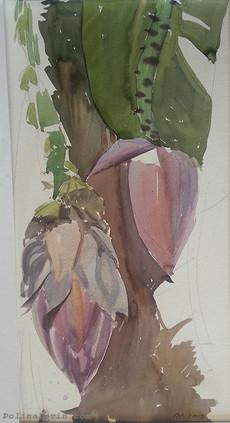 Цветы банана