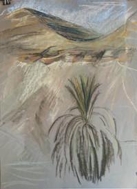 Пальмы и прочее