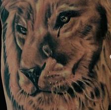 Close Up Lion Face
