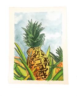 Pineapple Grenade Field