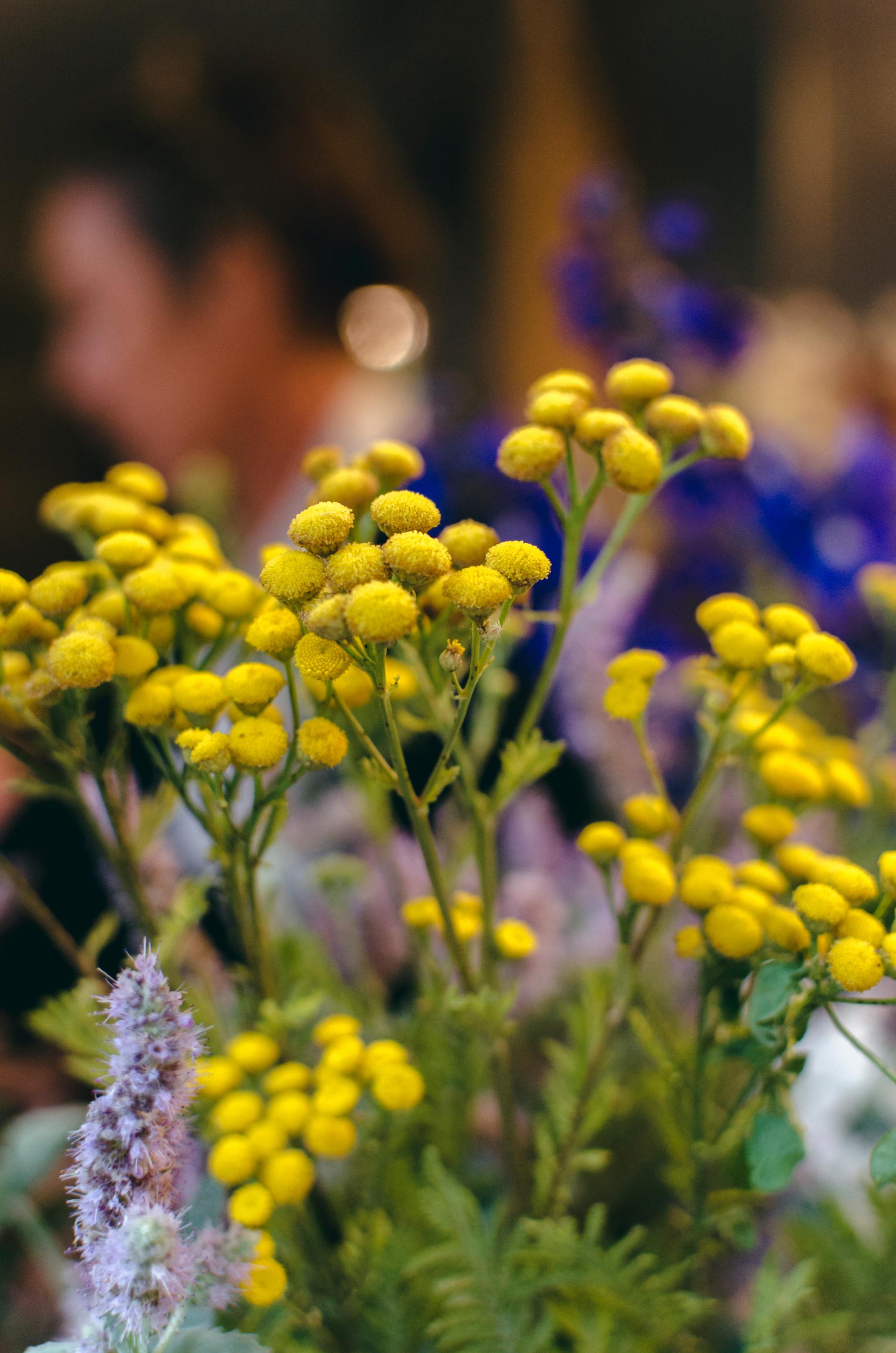 Todas las flores