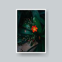 Postal Flor.jpg