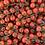 Thumbnail: Cherry Tomates (250G)