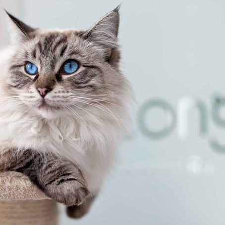 Feline the love for our furry friends ... Longcroft Luxury Cat Hotel.