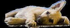 dog-sleeping.png