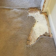 Carpet Repairs_edited.jpg