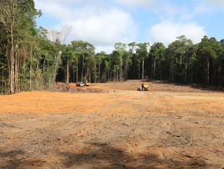 Worrying outlook for Caxiuana National Forest...