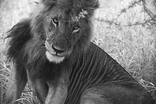 LiontheBest.jpeg