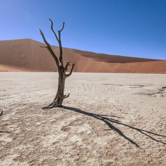 Deadvlei / Namibia