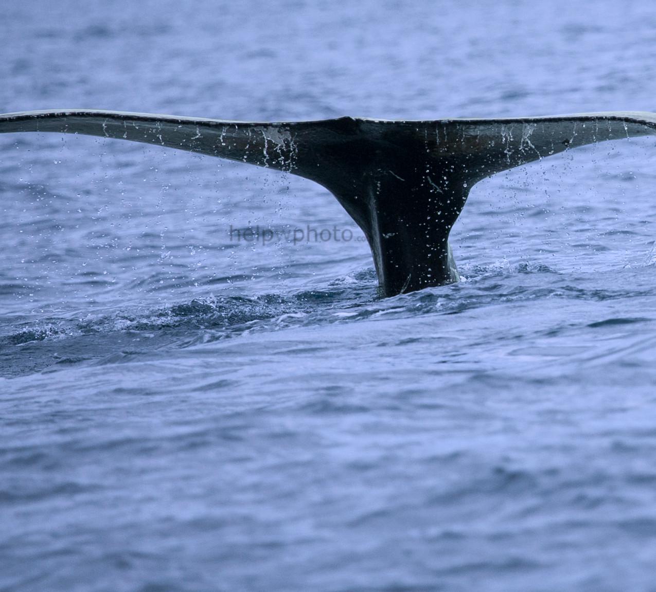 whale2018_3web