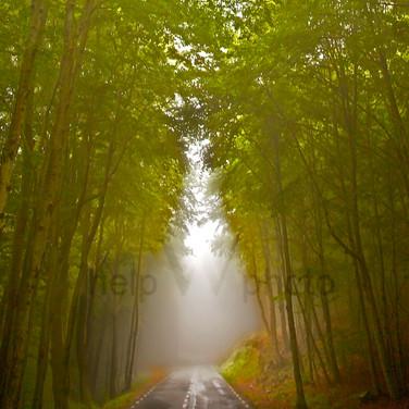 Barcelona Forest Light 2