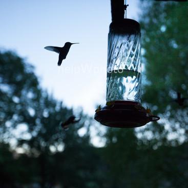 birdflyW.jpg