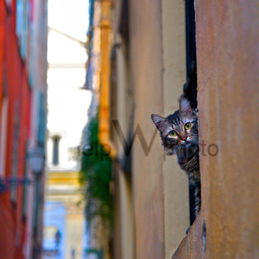 Nice - CAT