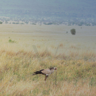 Serengeti - Secretary
