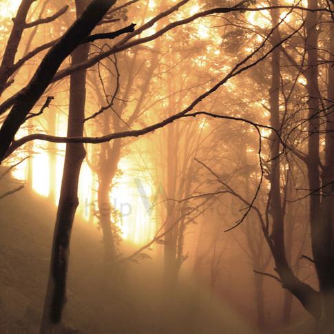 Barcelona - Forest Light
