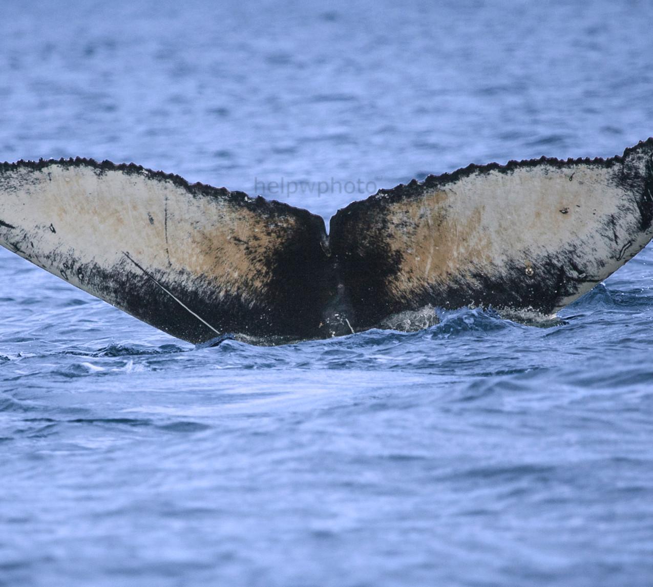 whale2018_4web