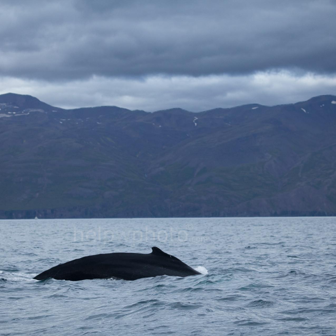 whale2018_5