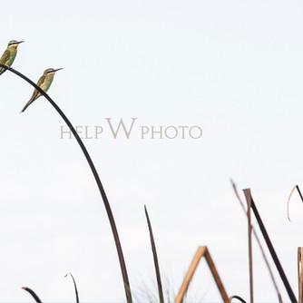 Birds / Okavango / Botswana