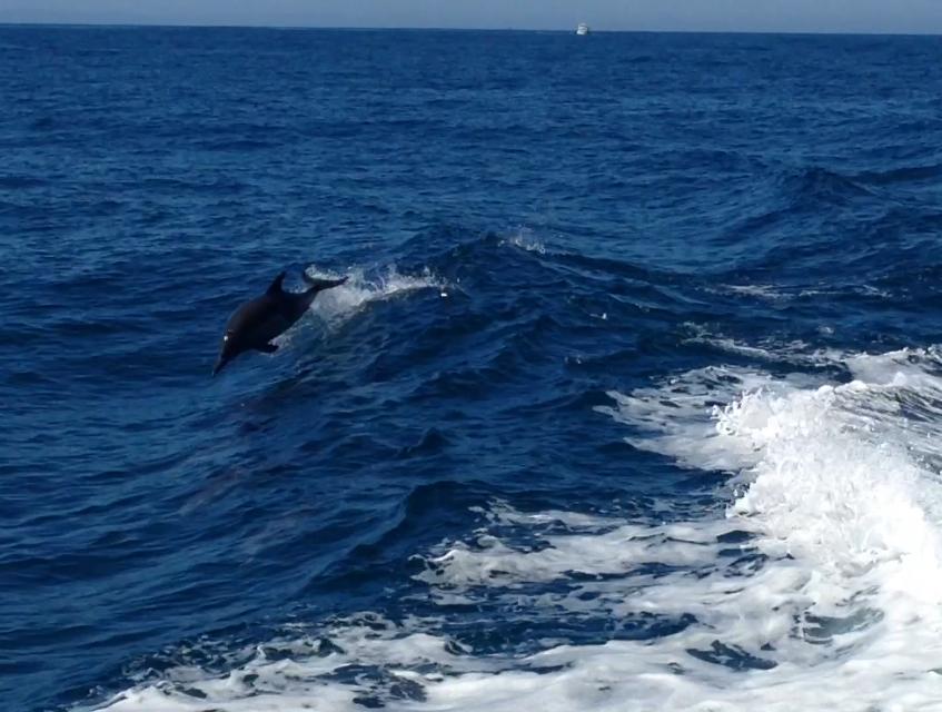 Whalewatchphoto