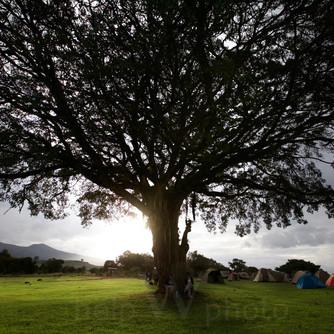 Ngrongoro - Simba Camping Site