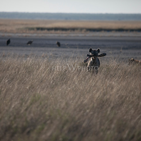 Etosha / Namibia