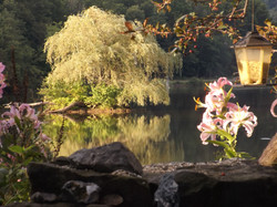 Island dreams bloom in Halcottsville