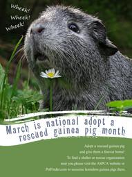 Guinea Pig Month.jpg