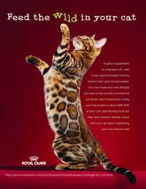Mockup ad for Royal Canin cat food.