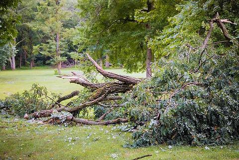 bigstock-Storm-Damage-Tree-Broken-Afte-1