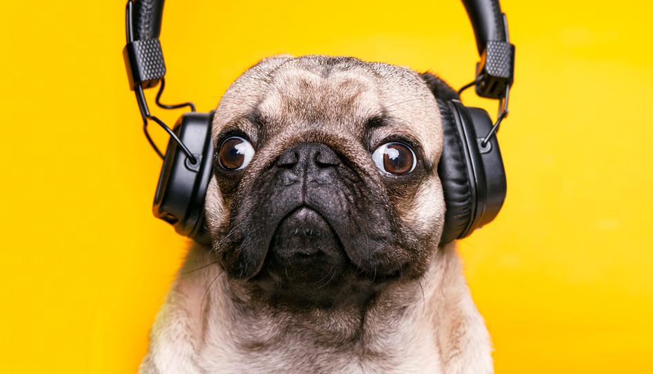 RONFstyle ascoltare comunicare.jpg