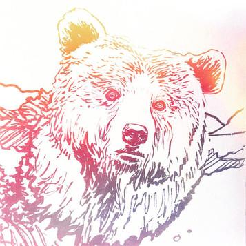 Bear Medicine (linework), 2017.