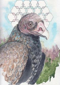 Vulture Medicine, 2018.