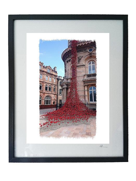 Weeping Window poppy display by Mike Sanderson