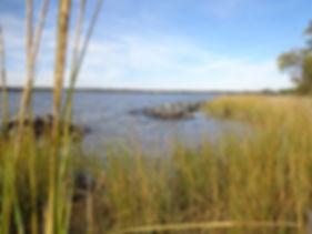 SSS - Living Shoreline 2.jpg