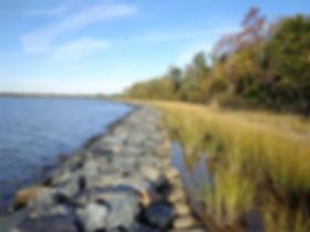 SSS - Living Shoreline.jpg