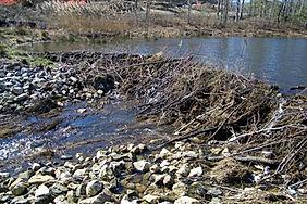 Large Dam Repair - Before.jpg