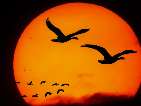 How close to the sun will you fly?