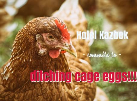 Hotel Kazbek iz Dubrovnika prvi dao cage-free prisegu!