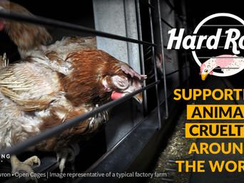 Globalnom kampanjom tražimo da Hard Rock postane cage-free