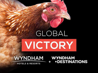 Wyndham Hotels & Resorts i Wyndham Destinations postali cage-free!