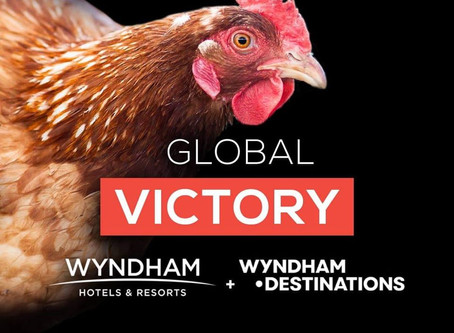 Wyndham Hotels & Resorts i Wyndham Destinations postali cage-free!