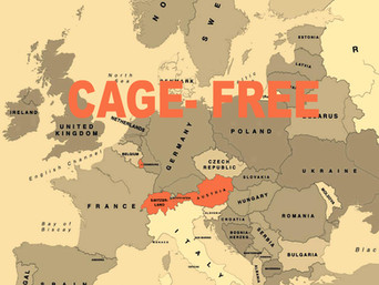 Austrija, Švicarska i Luksemburg europske su zemlje koje u potpunosti odbacuju kaveze u industriji j