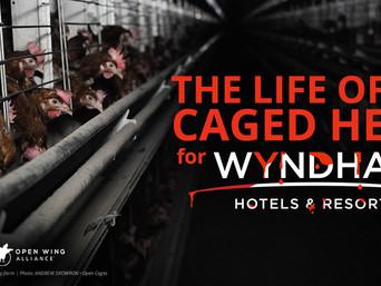 Wyndham hoteli, prestanite poticati okrutnost prema životinjama!