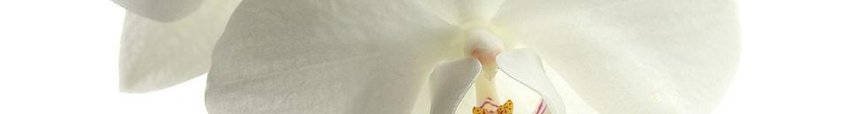 flower-179004_1280.jpg