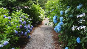 「南沢あじさい山の花を楽しみ、秋川渓谷を研究する会」